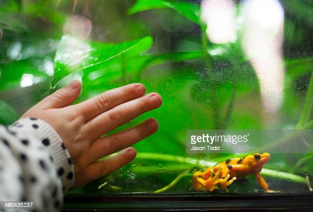 Childs hand on aquarium glass