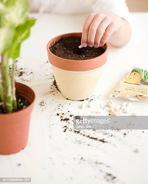child's hand planting seed, close-up - putting stock pictures, royalty-free photos & images