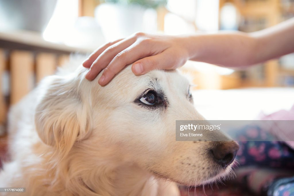 Child's hand stroking the head of a pet dog affectionately : Stock Photo