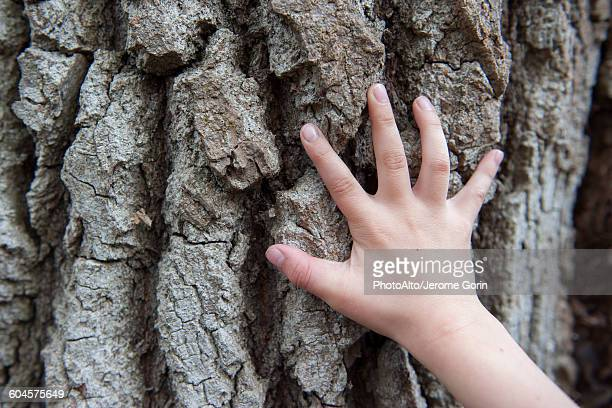 childs hand touching tree bark - bark stock pictures, royalty-free photos & images