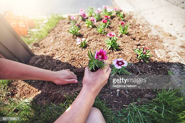 child's hands planting flower