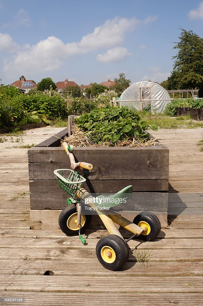 A Child S Tricycle Stands In Front Of A Raised Strawberry