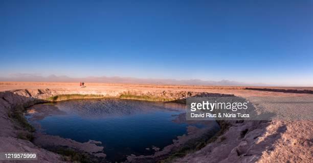 chile, antofagasta region, atacama desert, ojos del salar - ソルトポンド ストックフォトと画像