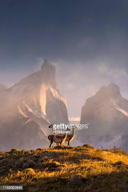 chile, patagonia, torres del paine national park - chile fotografías e imágenes de stock