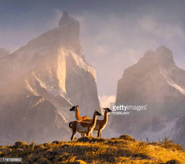chile, patagonia, torres del paine national park - latin america stock pictures, royalty-free photos & images