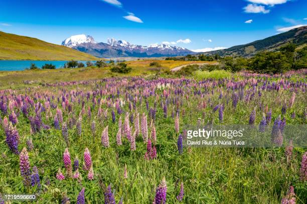 chile, patagonian region, torres del paine national park - patagonische anden stock-fotos und bilder