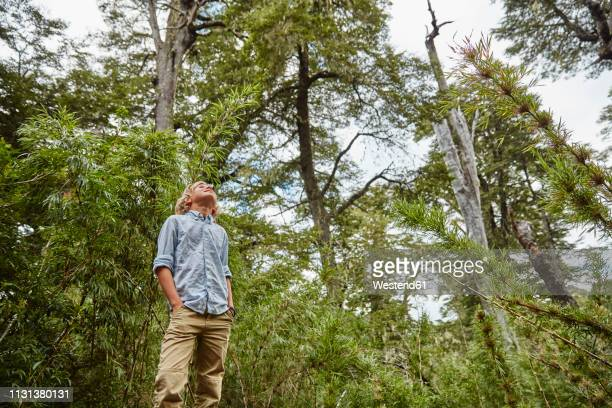 chile, puren, nahuelbuta national park, boy standing in bamboo forest looking up - hands in pockets stock pictures, royalty-free photos & images