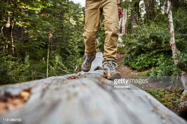 chile, puren, nahuelbuta national park, close-up of boy walking on a tree trunk in forest - 人の足 ストックフォトと画像