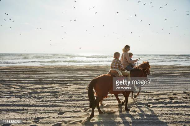 chile, vina del mar, mother with two sons riding horses on the beach - vina del mar stock pictures, royalty-free photos & images