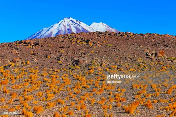 chilean andes altiplano at sunrise and volcano, idyllic atacama desert, snowcapped volcanic steppe puna landscape panorama – antofagasta region, chilean andes, chile, bolívia and argentina border - altiplano stock pictures, royalty-free photos & images