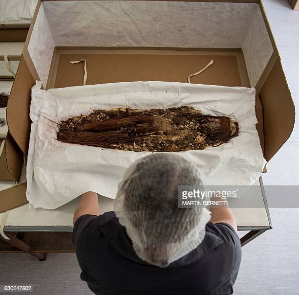 Chilean anthropologist Veronica Silva shows one of the mummies from the ancient Chinchorro culture at the National Museum of Natural History in...
