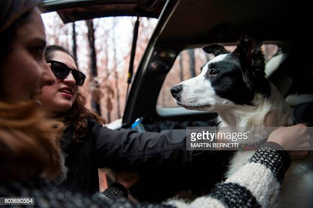 Chilean Francisca Torres dog trainer and member of animal activism group Pewos and her sister Constanza prepare their trained border collies for tree...