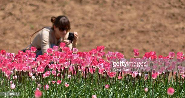 Chilean tourist takes pictures of tulips in the Siraj Bagh garden where more than a million tulips are in full bloom on April 14 2011 in Srinagar the...