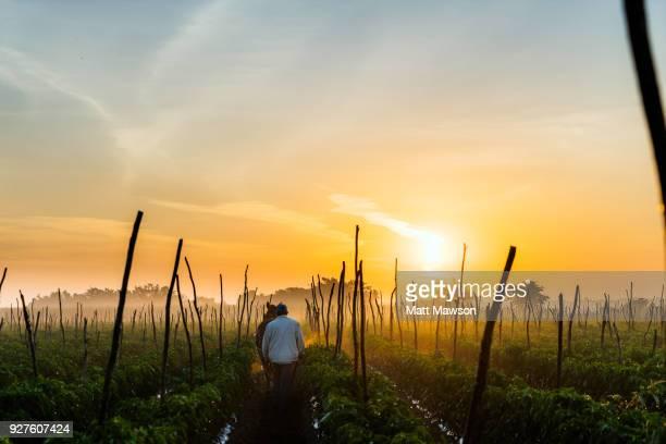 chilli fields in sinaloa mexico - paisajes de mejico fotografías e imágenes de stock