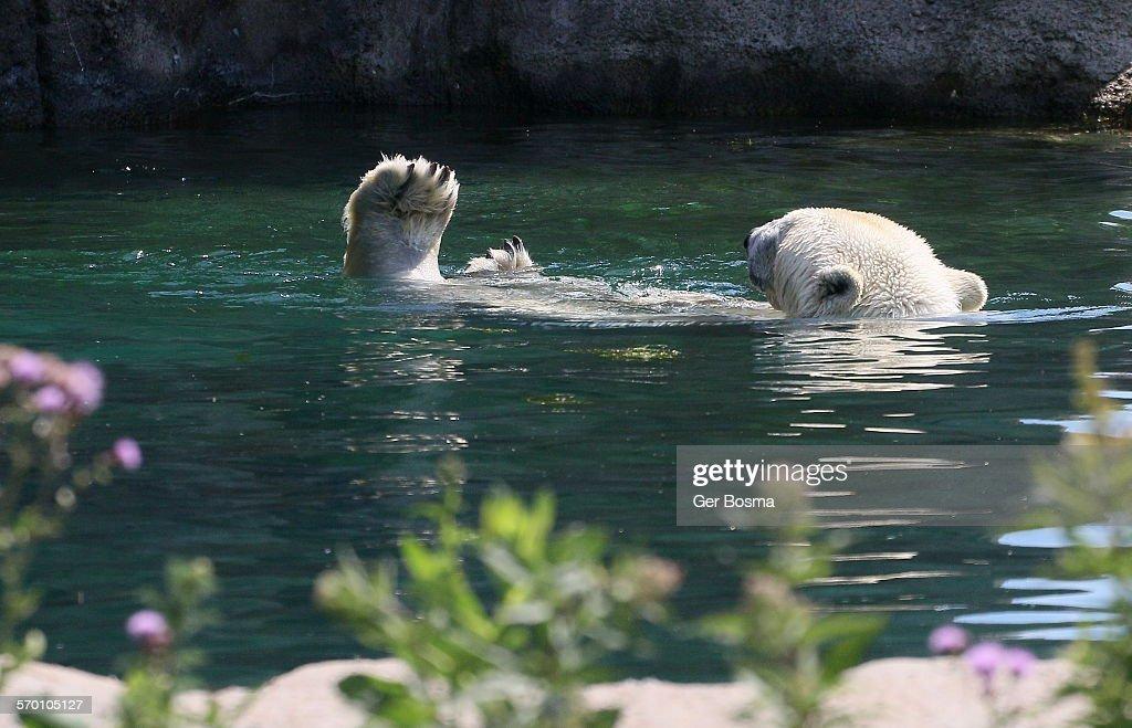 Polar bear toes!