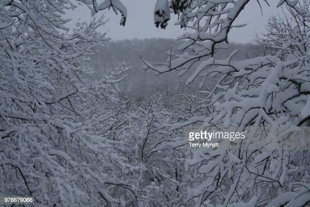 chilly - snow white foto e immagini stock
