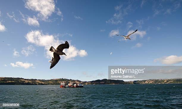 Chiloe Island, Chile