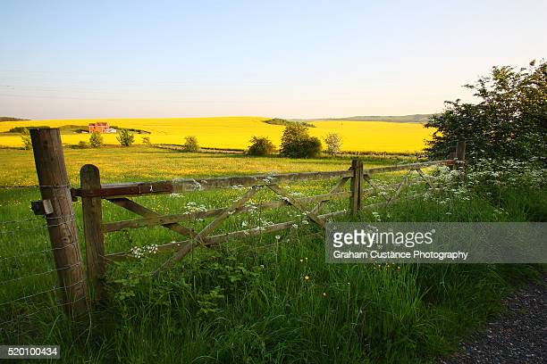 chilterns countryside - buckinghamshire stock pictures, royalty-free photos & images