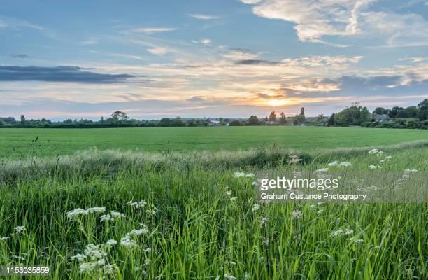 chilterns sunset - バッキンガムシャー ストックフォトと画像