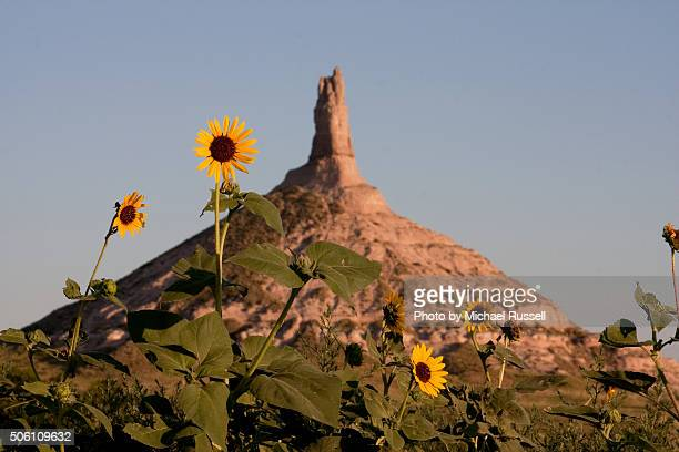chimney rock sunflowers - the oregon trail stock photos and pictures