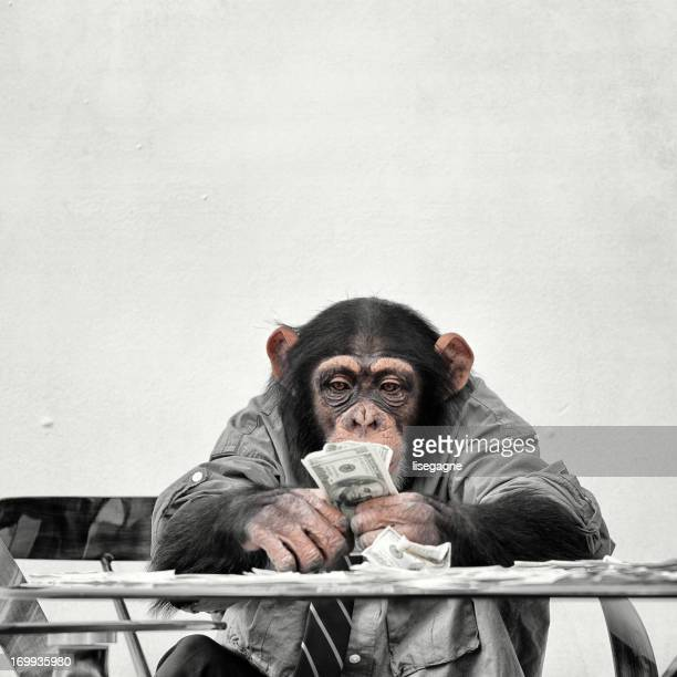Chimp with cash