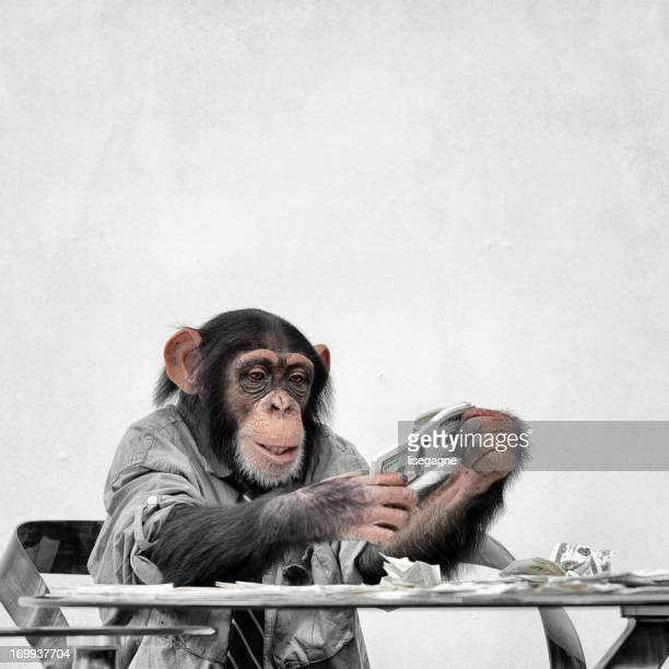 Chimp mit Bargeld