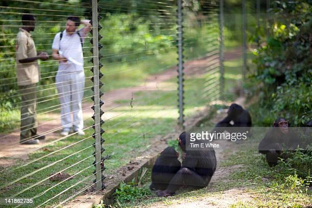 Chimpanzee enclosure Primate sanctuary, Mefou National Park, near Yaounde, Cameroon, Africa