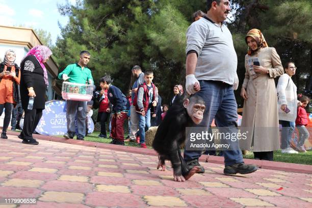 Chimpanzee named Can is seen during a naming ceremony for two macaque monkeys named Fistik and Zeytin after they were rescued from illegal kidnapping...