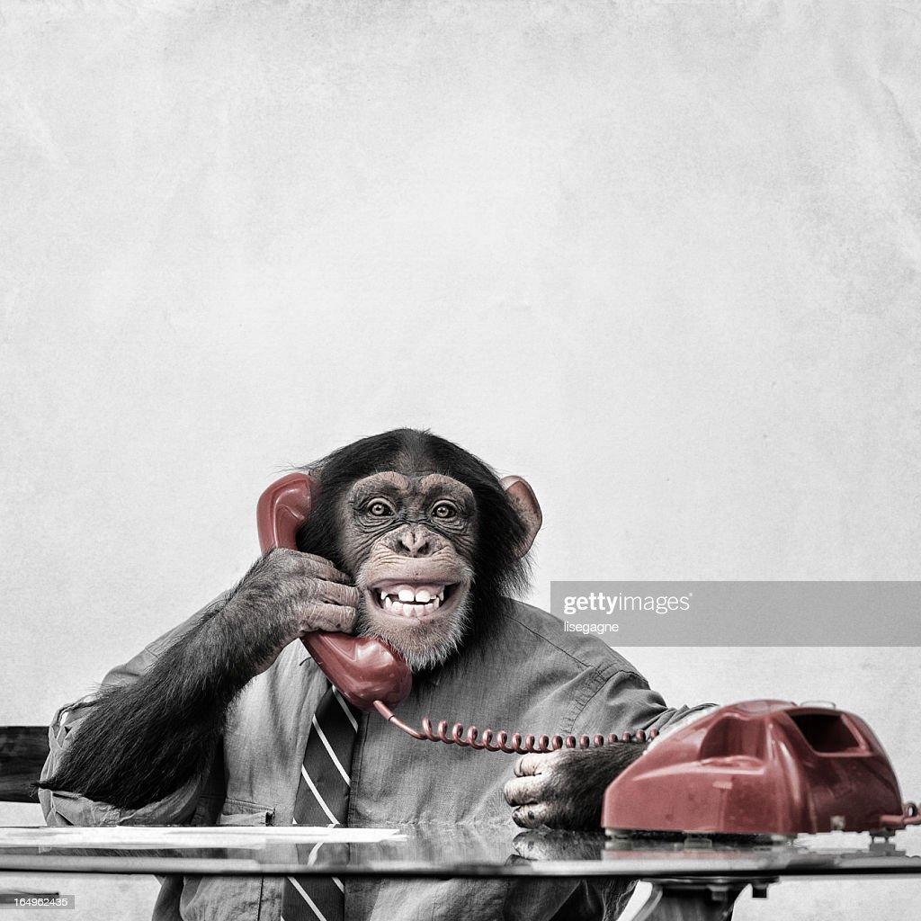 Chimpanzee on the phone : Stock Photo