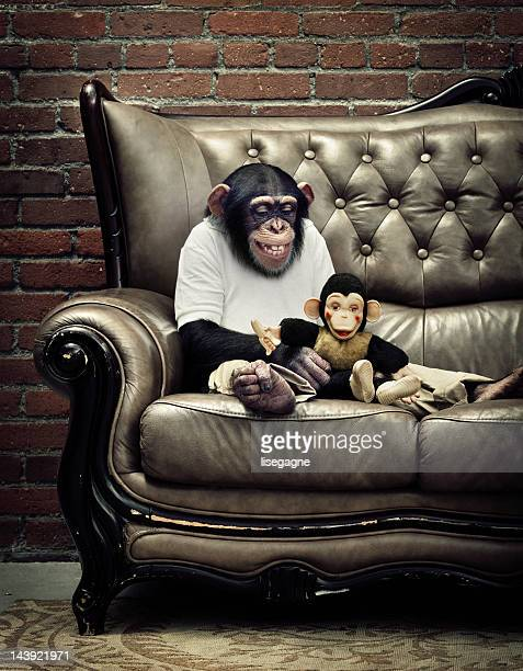 chimpanzee playing with monkey toy - chimpanzee stock pictures, royalty-free photos & images