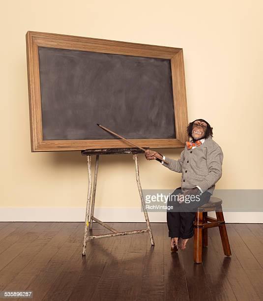Chimpancé Professor at the Chalkboard