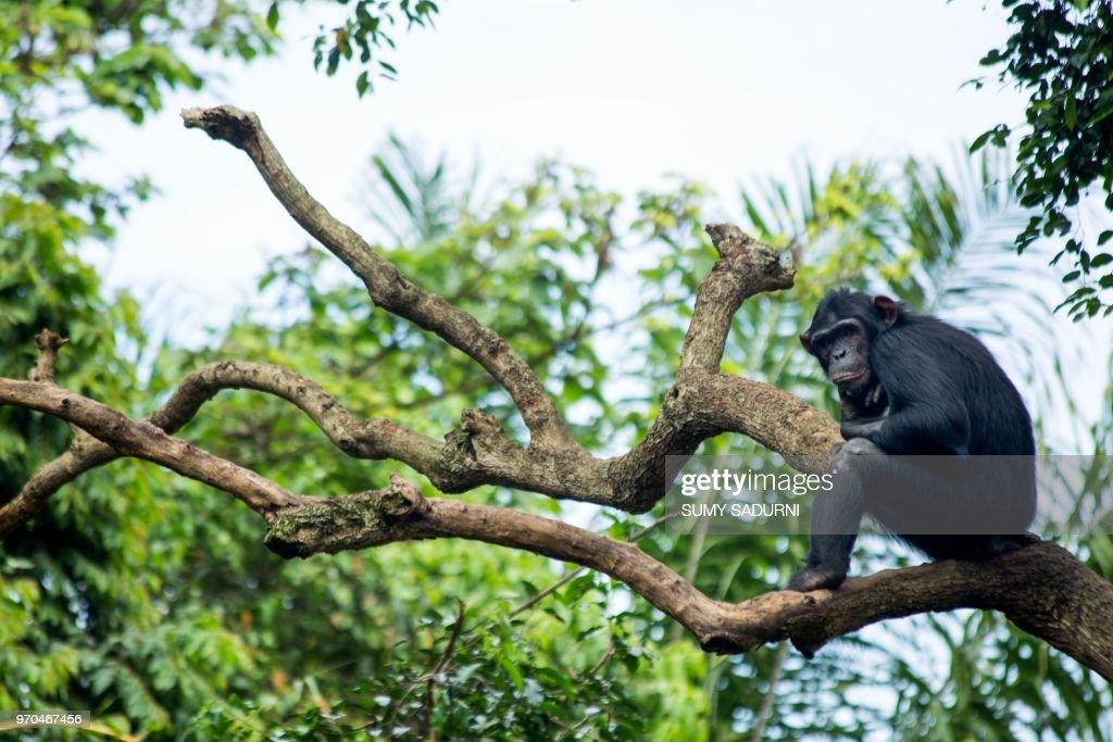 UGANDA-WILDLIFE-ANIMALS : News Photo