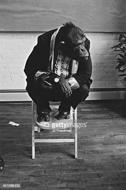 A chimpanzee wearing a tuxedo and roller skates sits on a chair at a photographic gallery opening New York City 1974
