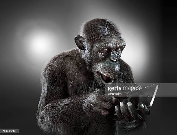 Chimpanzee with a smartphone