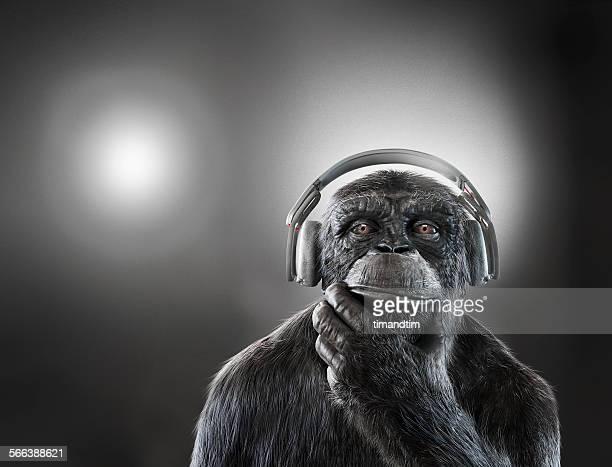Chimpanzee with headphones