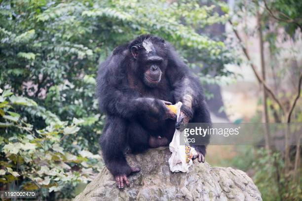 Chimpanzee Yu Hui uses soap to wash a Tshirt at Locajoy theme park on December 4 2019 in Chongqing China