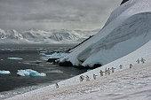 chin strap penguins antarctica glacier blue