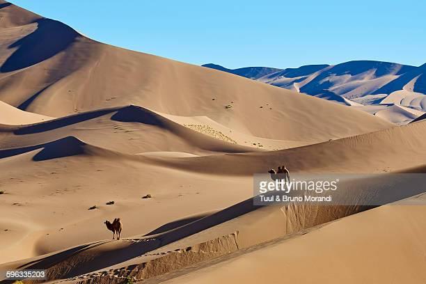 china, inner mongolia, badain jaran desert - 内モンゴル自治区 ストックフォトと画像