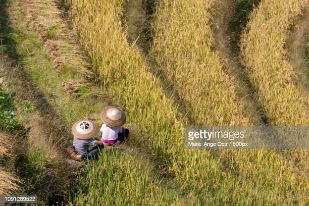 china, longji rice terraces (guangxi) - marie ange ostr�� photos et images de collection