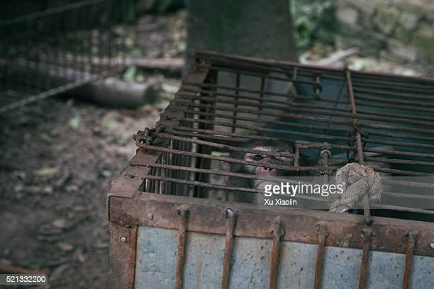 china monkey trainer - 動物調教師 ストックフォトと画像