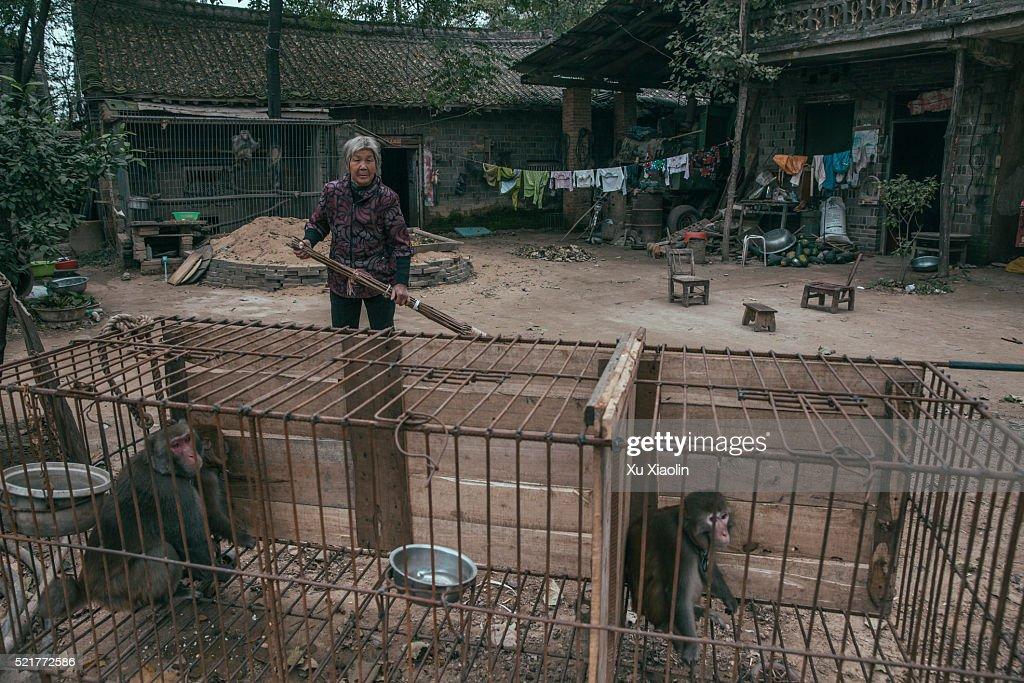 China Monkey trainer : Stock Photo