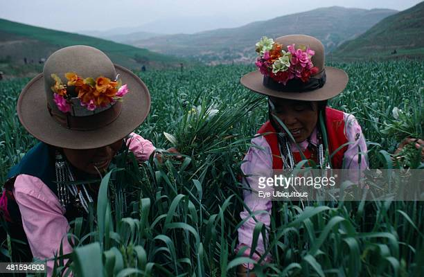 China Qinghai Province Huzhu County Tu minority women working in WFP Project wheat fields