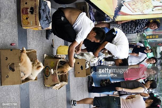 China Shanghai Männer verkaufen Hundewelpen