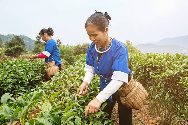 2056 life as a china farmer essay Short essay about advantages and disadvantages of technology an analysis of three companies from the food industry yum brands panera bread and starbucks coffee.