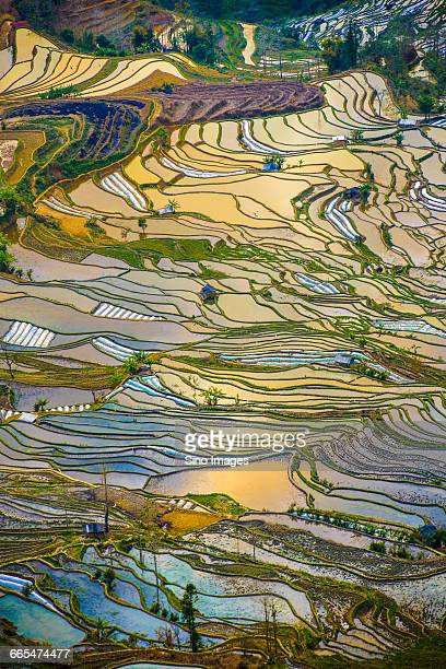 china, yunnan province, honghe prefecture, yuanyang, landscape of rice terraces - yuanyang stock pictures, royalty-free photos & images