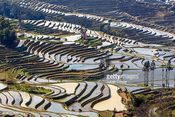 china, yunnan province, irrigated paddy fields, - yuanyang stock-fotos und bilder