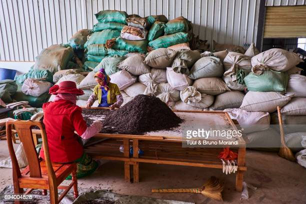 china, yunnan, xishuangbanna district, pu'er tea, pu'er tea factory, one of the best chinese tea - yunnan province stock pictures, royalty-free photos & images