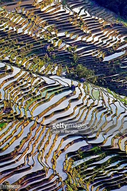 china, yunnan, yuanyang, rice terraces, aerial vie - reisterrasse stock-fotos und bilder
