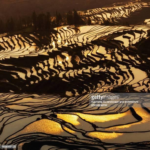 China, Yunnan, Yuanyang, rice terraces, dusk, elevated view