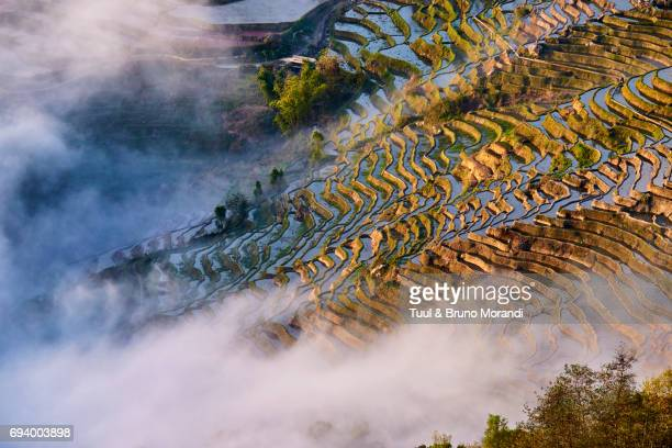 china, yunnan, yuanyang, terraced paddy-fields - yuanyang stock pictures, royalty-free photos & images